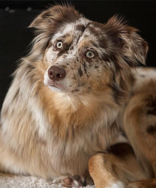 Conchi Therapiehund