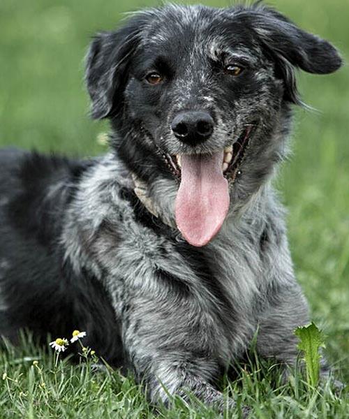 Emma Therapiehund